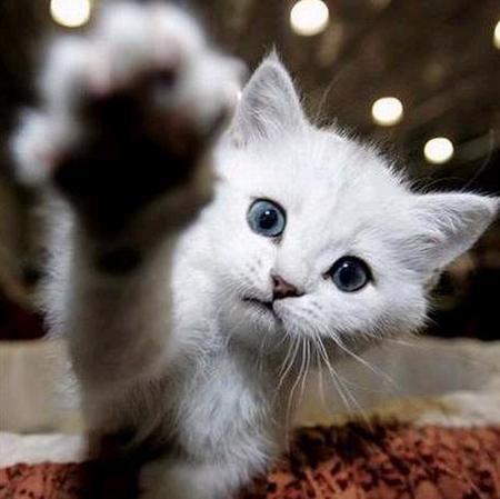 Люблю котов