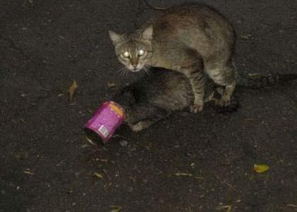 Может у кота просто из пасти плохо пахло?