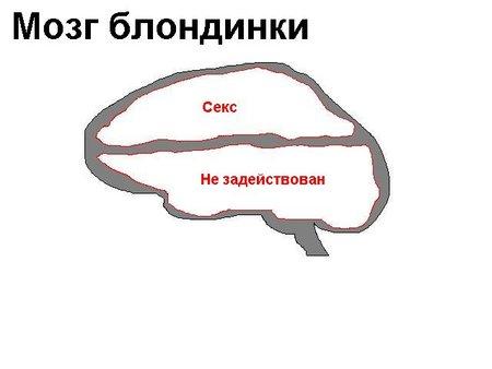 мОЗГ бЛОНДИНКИ