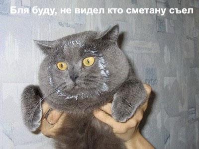 Хмтрый котяра
