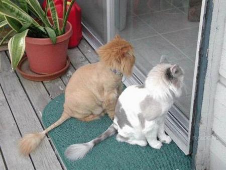 Настоящие львы