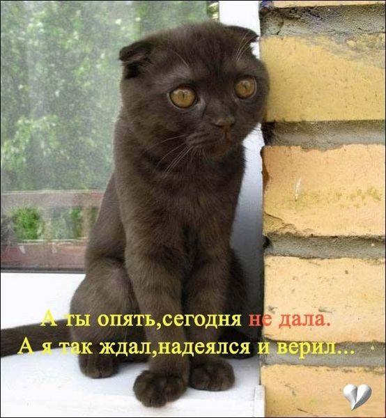 Новая паптия кошаков!!! Смотреть всем!!!!