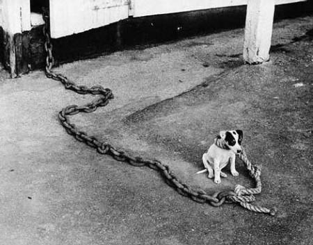 У дворі злий пес. (Не наступіть)